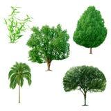 Conjunto de árboles Imagen de archivo libre de regalías