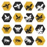 Conjunto de abejas Fotos de archivo