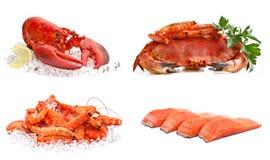 Conjunto de alimento de mar Fotografía de archivo libre de regalías