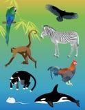 Conjunto de animales Imagen de archivo