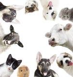 Conjunto de animales Imagenes de archivo