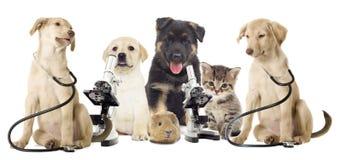 Conjunto de animales Imagen de archivo libre de regalías