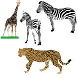 Conjunto de animales africanos Fotografía de archivo