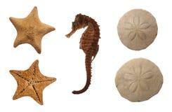 Conjunto de animales de mar Foto de archivo
