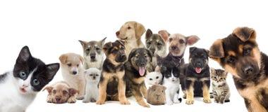 Conjunto de animales domésticos imagen de archivo libre de regalías