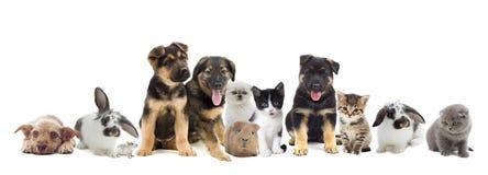 Conjunto de animales domésticos imagenes de archivo