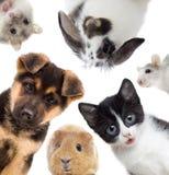 Conjunto de animales domésticos foto de archivo libre de regalías