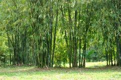 Conjunto de bambu Imagens de Stock Royalty Free