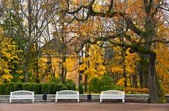 Conjunto de bancos en el parque. Imagen de archivo