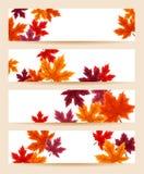 Conjunto de banderas con las hojas de arce del otoño. libre illustration