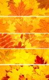 Conjunto de banderas con las hojas de otoño Imágenes de archivo libres de regalías