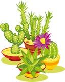 Conjunto de cactus Fotografía de archivo