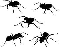 Conjunto de cinco siluetas de la hormiga Foto de archivo libre de regalías