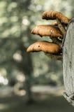 Conjunto de cogumelos pequenos Fotos de Stock Royalty Free