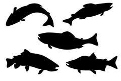 Conjunto de color salmón de los pescados Foto de archivo