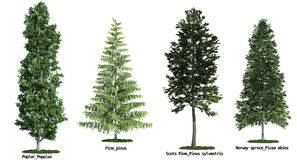 Conjunto de cuatro árboles aislados contra blanco puro Fotos de archivo libres de regalías