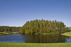 Conjunto de Cypress calvo na lagoa Fotos de Stock