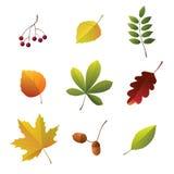 Conjunto de detalles del otoño