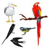Conjunto de diversos pájaros Fotos de archivo libres de regalías