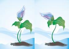 Conjunto de dos flores del resorte Imagen de archivo libre de regalías