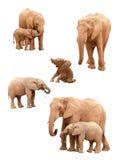 Conjunto de elefantes aislados en blanco Imagen de archivo