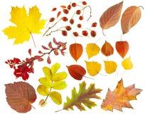 Conjunto de elementos del diseño en un tema del otoño. Imagen de archivo