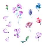 Conjunto de elementos florales Foto de archivo libre de regalías
