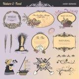Conjunto de elementos y de escrituras de la etiqueta para el alimento y la bebida Fotos de archivo