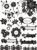 Conjunto de elementos y de manojos florales Foto de archivo libre de regalías