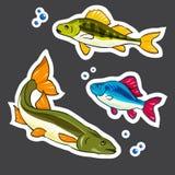 Conjunto de etiquetas engomadas Pescados del río: salmones, perca Vector Imagen de archivo libre de regalías