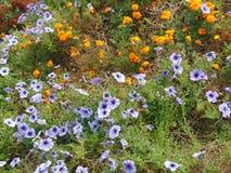 Conjunto de flor Fotos de Stock