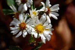 Conjunto de flor branco & amarelo bonito imagens de stock