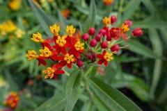 Conjunto de flor pequeno alaranjado vermelho amarelo do verão fotografia de stock royalty free