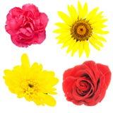 Conjunto de flores Imagenes de archivo