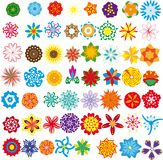 Conjunto de flores Imagen de archivo