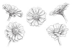 Conjunto de flores Imagen de archivo libre de regalías