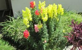 Conjunto de flores Fotografia de Stock