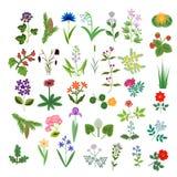 Conjunto de flores decorativas Fotos de archivo libres de regalías