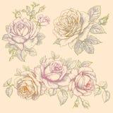 Conjunto de flores rosas Dibujo multicolor libre illustration