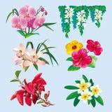 Conjunto de flores tropicales Fotografía de archivo libre de regalías