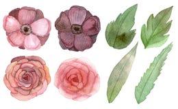 Conjunto de flores y de hojas Imagenes de archivo