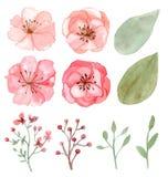 Conjunto de flores y de hojas Fotografía de archivo