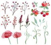 Conjunto de flores y de hojas Foto de archivo