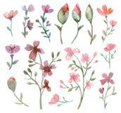 Conjunto de flores y de hojas Ilustración del Vector
