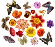 Conjunto de flores y de mariposas Foto de archivo