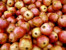 Conjunto de fruta grande. Granadas maduras Fotografía de archivo libre de regalías