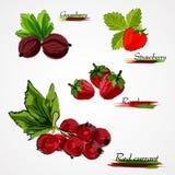 Conjunto de frutas Fotos de archivo libres de regalías