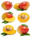 Conjunto de frutas frescas del mango aisladas en blanco Foto de archivo libre de regalías