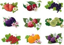 Conjunto de frutas maduras Foto de archivo libre de regalías