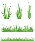 Conjunto de hierba verde Foto de archivo libre de regalías